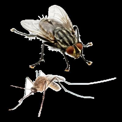 Moscas y mosquitos