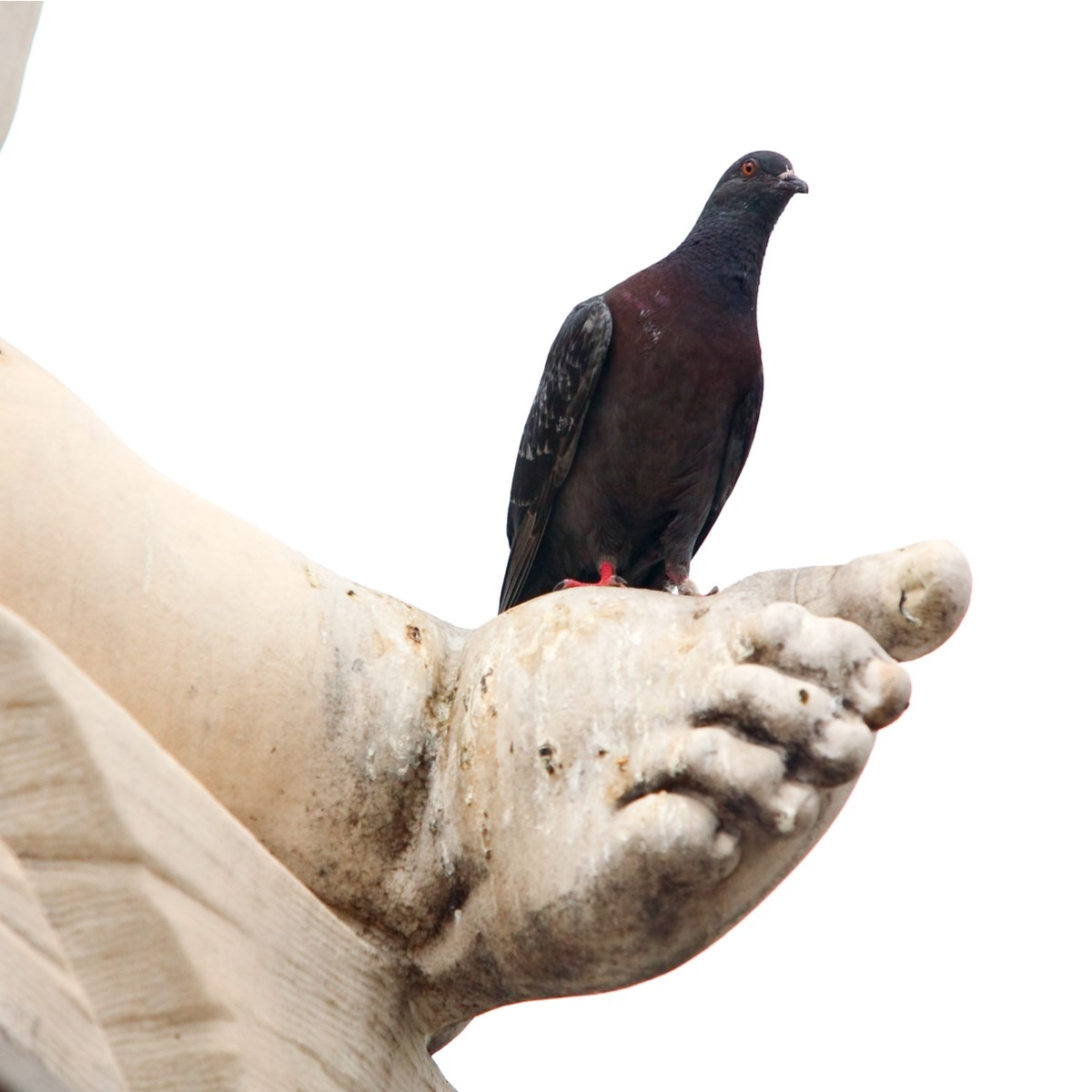 Suciedad excrementos palomas