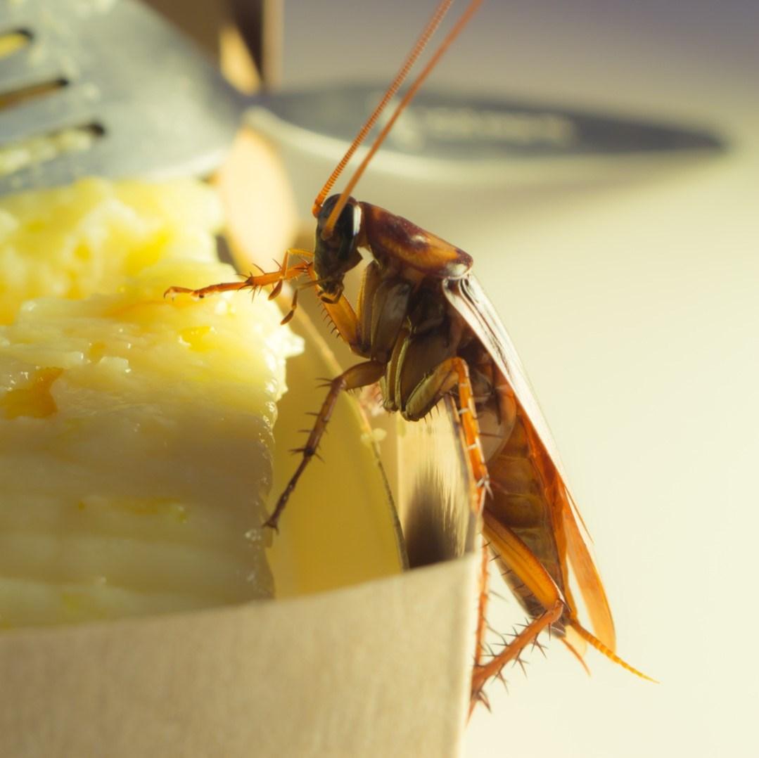 Problemas para la salud cucarachas