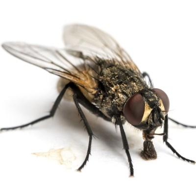 Plagas moscas Alicante