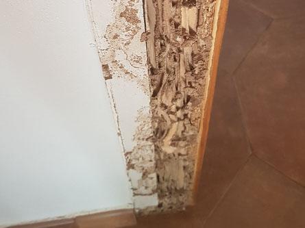 Desperfectos madera termitas