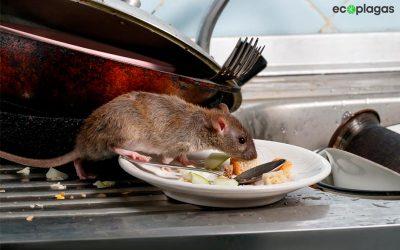 Consejos para el control de plagas en hostelería