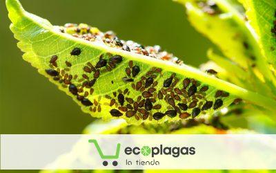 Descubre nuestra tienda online de productos para el control de plagas