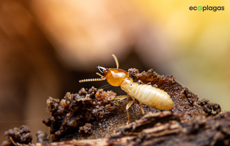 Tratamiento en muebles de madera para prevenir y evitar plagas