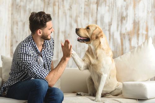 Cómo evitar las garrapatas en los perros